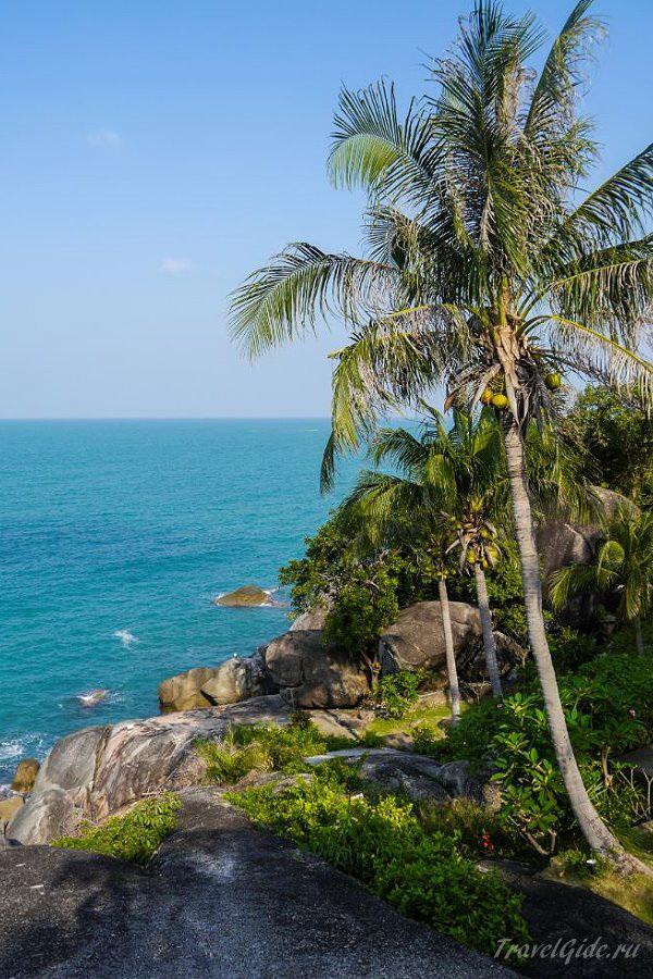 Пальма на пляже Самуи