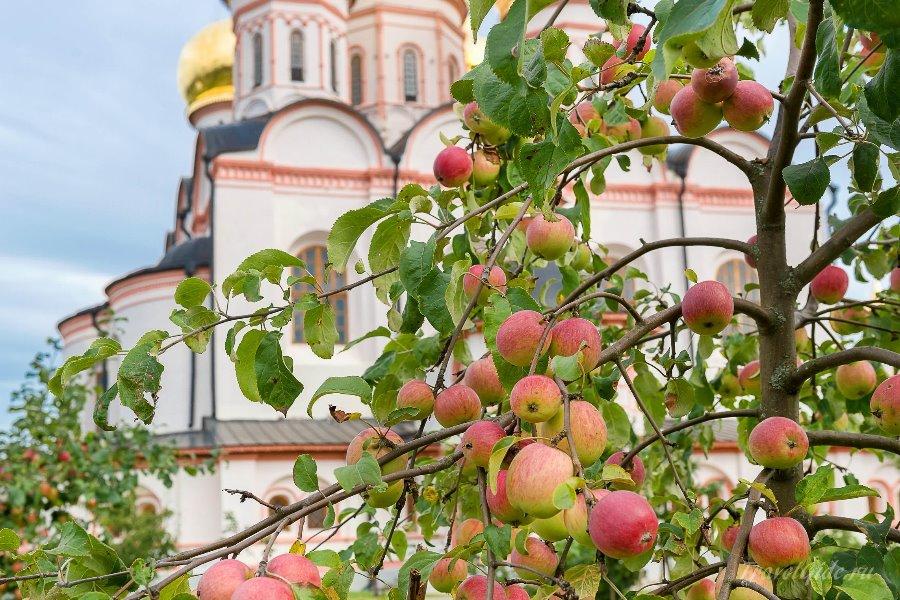Яблоки на фоне Валдайского монастыря