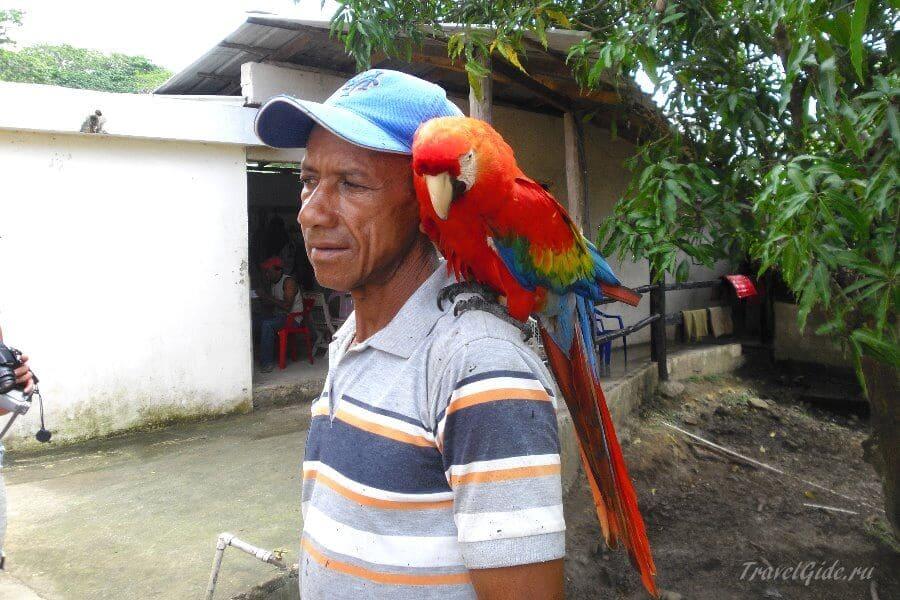 Попугай на плече
