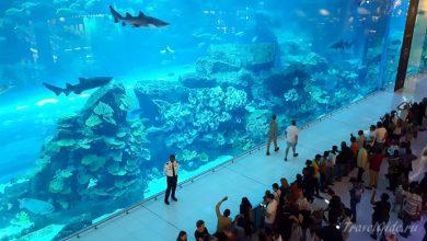Photo of Гигантский Аквариум в Дубае: стоит ли посещать?