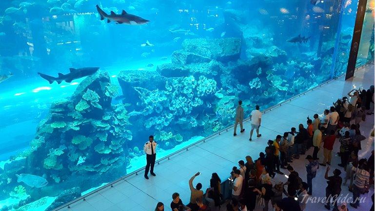 Аквариум молла в Дубае