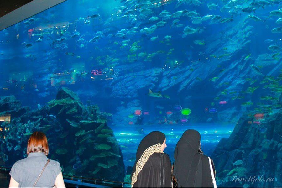 посетители у аквариума в дубае