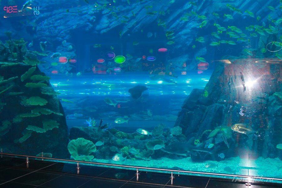 Красивый аквариум в Дубае