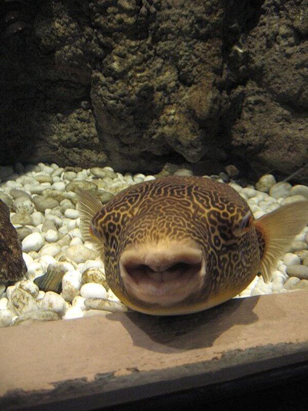 рыба позитив