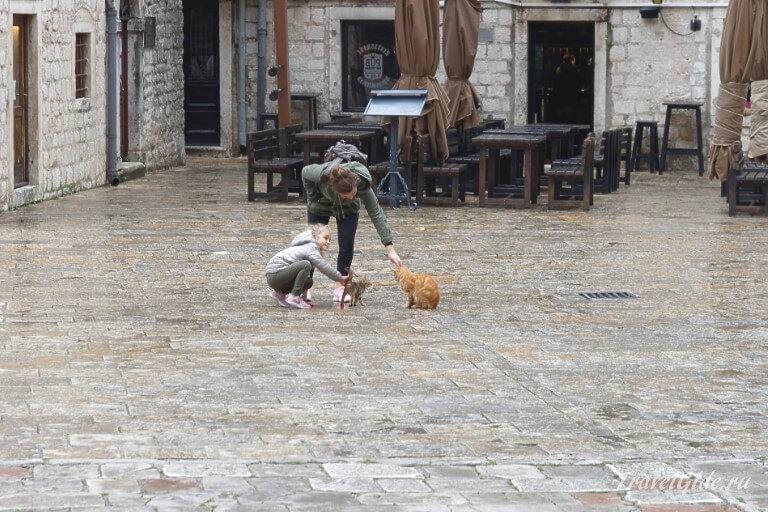 Кошки на площади