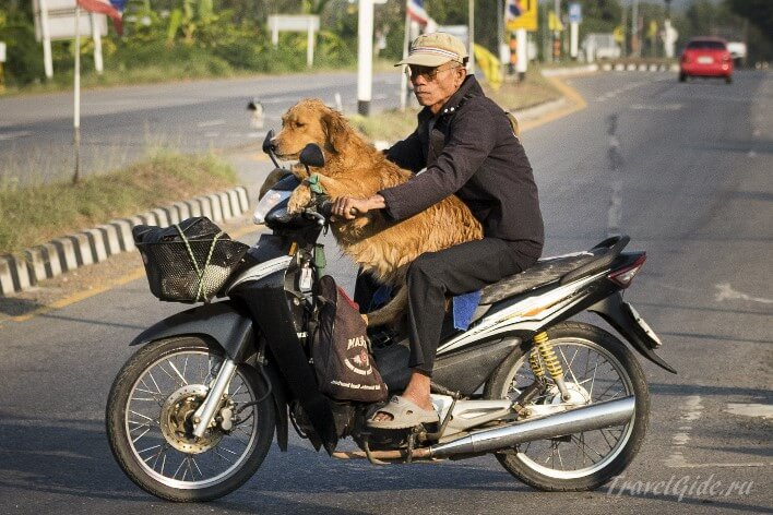 Пожилой таец на байке с собакой