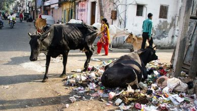 Photo of Почему в Индии так грязно: мусор, грязь, вонь и животные…