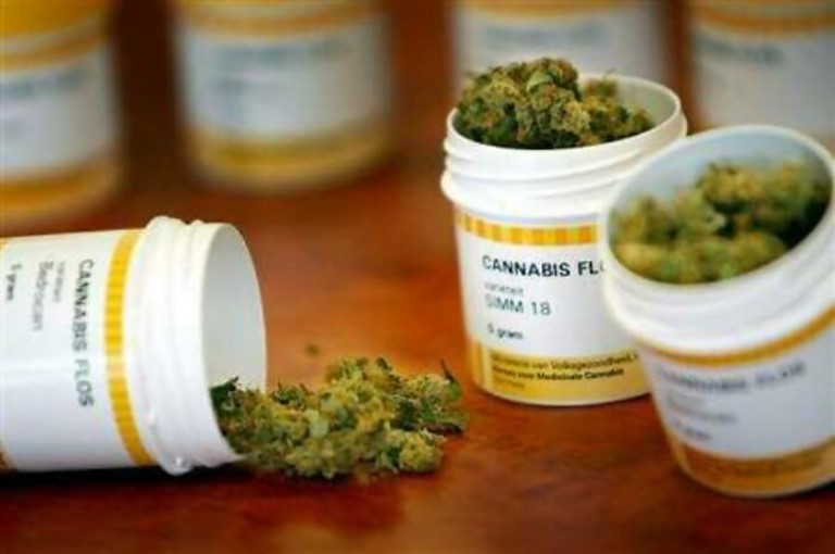 Cannabis медицинский © Travelgide.ru