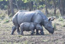 Photo of Заповедник Побитора в Ассаме – приют носорогов Индии
