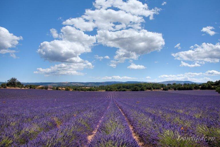 Поля лаванды во Франции © Travelgide.ru