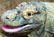 Photo of Последние драконы на планете Земля.