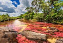 Photo of Фото докажут, что Каньо-Кристалес — самая волшебная река в мире.