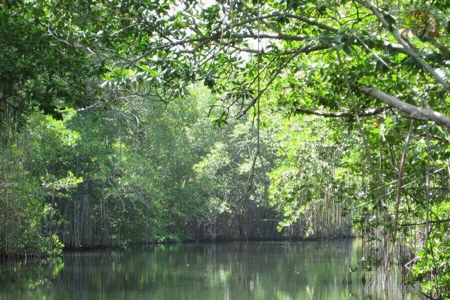 Чёрная река на Ямайке