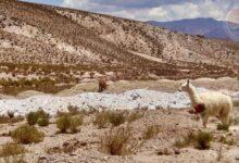 Photo of Как инки выращивали кукурузу в самой сухой пустыне на планете