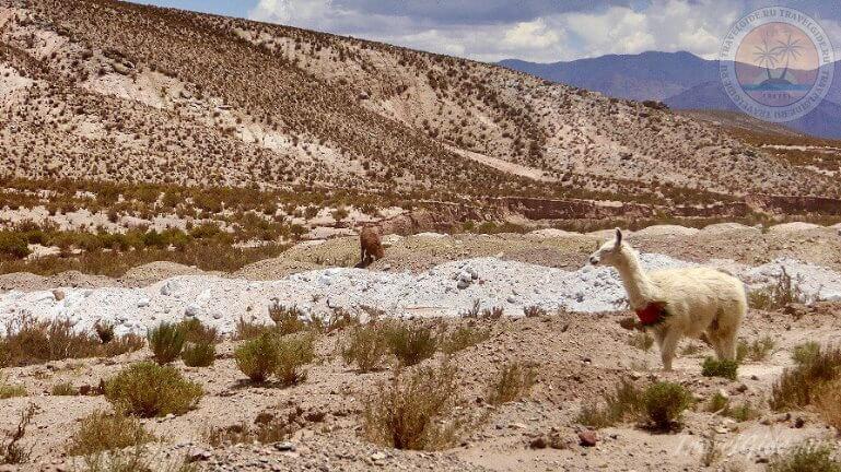 Атакама - пустыня в Чили